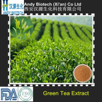 Antioxidant green tea extract polyphenol,catechin,EGCG