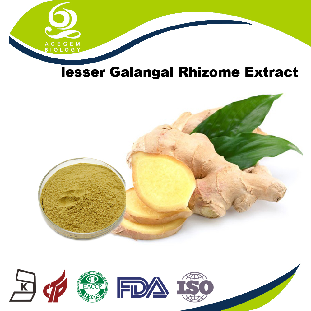 100% Natural Plant Extract Free Samples Lesser Galangal Rhizome Extract