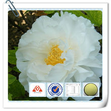 Tree Peony Bark Extract for Face Whitening