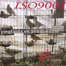 animal cage and poultry cage and rabbit cage