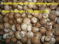 Dried Whole Betel Nut