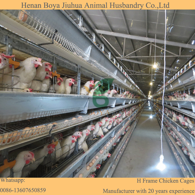 Automatic hen house used layer poultry equipment chicken breeding cage