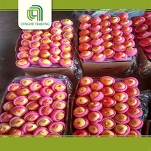 wholesale gala fresh apples specification