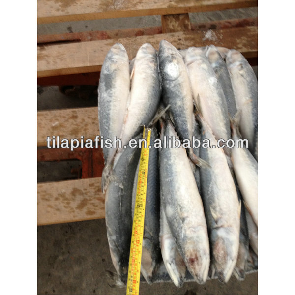 Mackerel cheap frozen food for sale