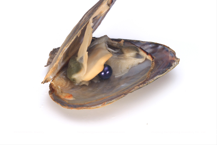 Hengsheng wholesale dark purple freshwater pearl oyster with 6-8mm nearly round pearl for DIY jewelry