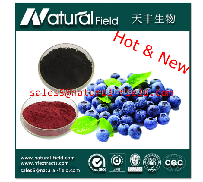 health food Anthocyanins Powder/ Bluberry Extract