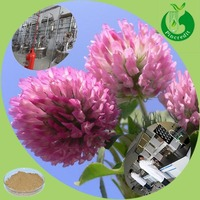 GMP factory supply red clover extract for antibiotic