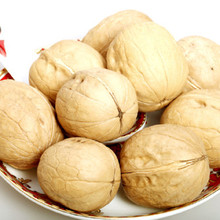 Large supplier of Blanched walnut meat