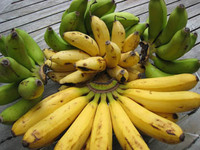 Latundan Bananas from Gensan by Volume