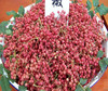 /product-detail/fagara-szechuan-pepper--60303518290.html