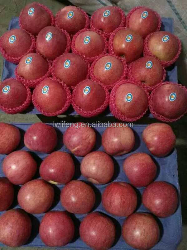 all the year supply best price of fresh qinguan apple