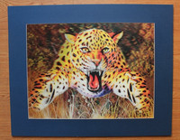 wall hanging decorative 3d pictures/ images of leopard 3d picture