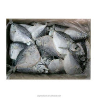 frozen moonfish with good quality whole round new landing