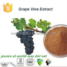 free sample ! China Hot sale herbal extraction Grape seed extract OPC 95% proanthocyanidins
