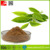 Health food Green Tea Extract Powder/Natural Green Tea Extract/Top Quality Green Tea
