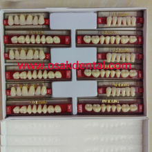 European Quality Three Layer Dental False Teeth/Dental Synthetic Teeth/Dental acrylic resin teeth