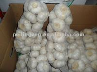 5.5cm FACTORY PURE WHITE FRESH GARLIC