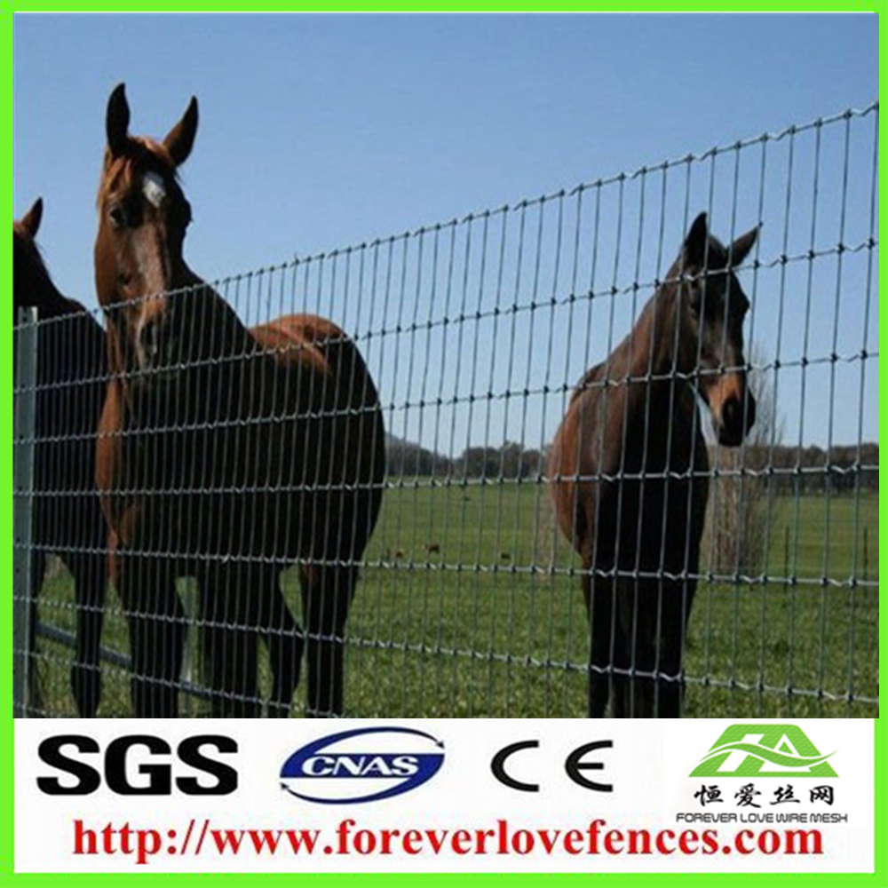 Grassland Fence/High Quality Hot Sale Cattle/Horse/Sheep Fence Farm Wire Mesh Fence