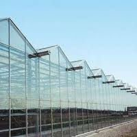Sell Dutch Greenhouses For Professional Growers
