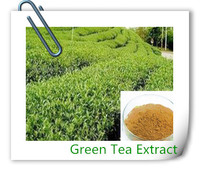 Organic Green Tea Extract,100% Natural Green Tea Powder,Green Tea Polyphenol
