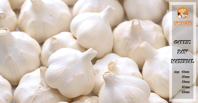 Certified High Quality Fresh Garlic