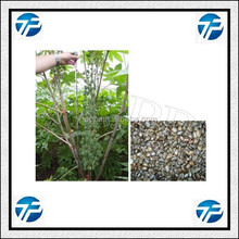 High Speed Save Labor Safe Castor Bean Shelling Machine