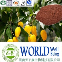 Hot sale Wild mango extract/mango powder/African Mango Seed Extract/Lose weight plant extract