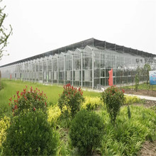 High quality agriculture greenhouse tomato frame greenhouse