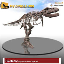 Full size dinosaur skeleton