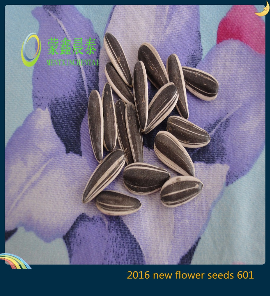 raw processing type long shape sunflower seeds in shell