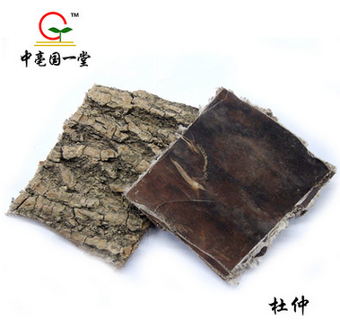 GMP Certified DU ZHONG/Cortex eucommiae bark/ tu-chung Dried root of Eucommia ulmoides Chinese traditional herb medicine