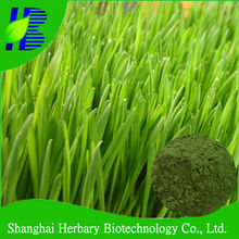 Barley Grass Juice P.E.,Barley Grass Powder in Bulk