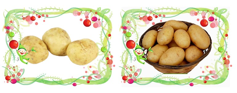 2016 Chinese Planting Fresh Potato