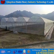 creat much better growing conditions Good looking film cover green house for tomato cucumber lettuce