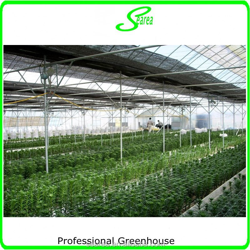 Multispan plastic film greenhouse for tomato cucuber flower horticulture