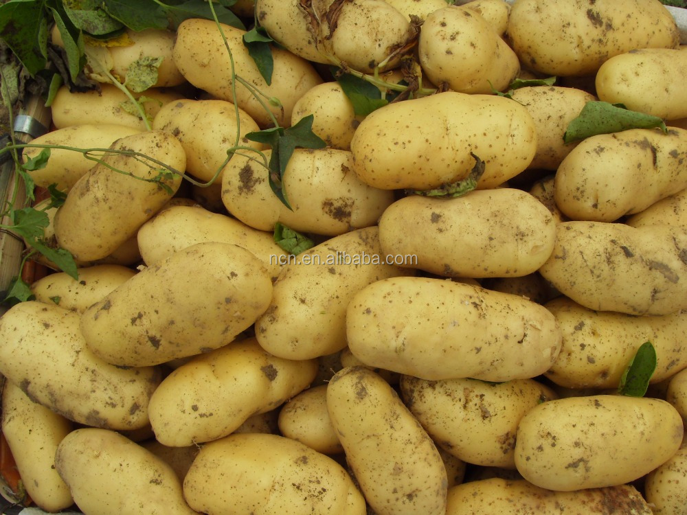 Chinese Fresh holland potato hot for sale