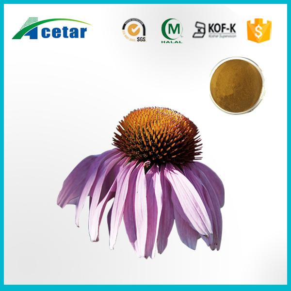 echinachea/ echinacea supplement from coneflower seeds