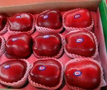 Bulk red Apples Organic fruit fresh huaniu apple from China