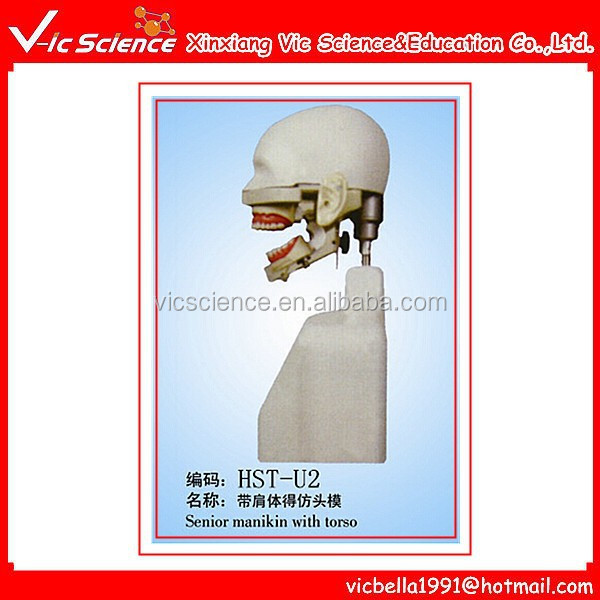 Dental Simulation Training Torso Model