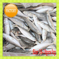 Cheap Frozen Round Scad Fish Seafood Small eyes horse mackerel Size 16-18 pcs/kg