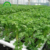 Industrial Vertical Growth Hidroponia Pvc Aeroponic Nft,nft hydroponic system