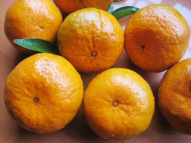 Yongchun kinndow citrus oranges fresh mandarin orange citrus fruit
