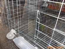 cheap breedingchicken/bird/rabbit/pigeons cages(manufacturer) pigeon cage for breeding