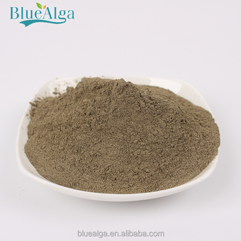 hot sale big quantity dried Laminaria Kombu extract powder for animals