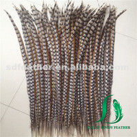 China supplier natural reeves pheasant tail feather cheap pheasant feather for carnival costumes