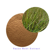 High quality yucca root extract powder 30% saponins