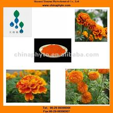 Marigold extract-Vacuum-packed-5%-90%HPLC/UV-High quality