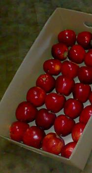 APPLES (RED CHIEF) FROM TURKEY