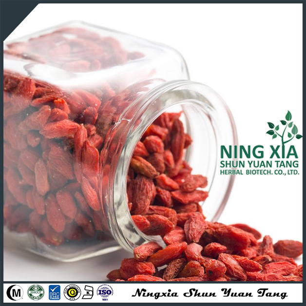professional dried fruit factory - dried goji berry