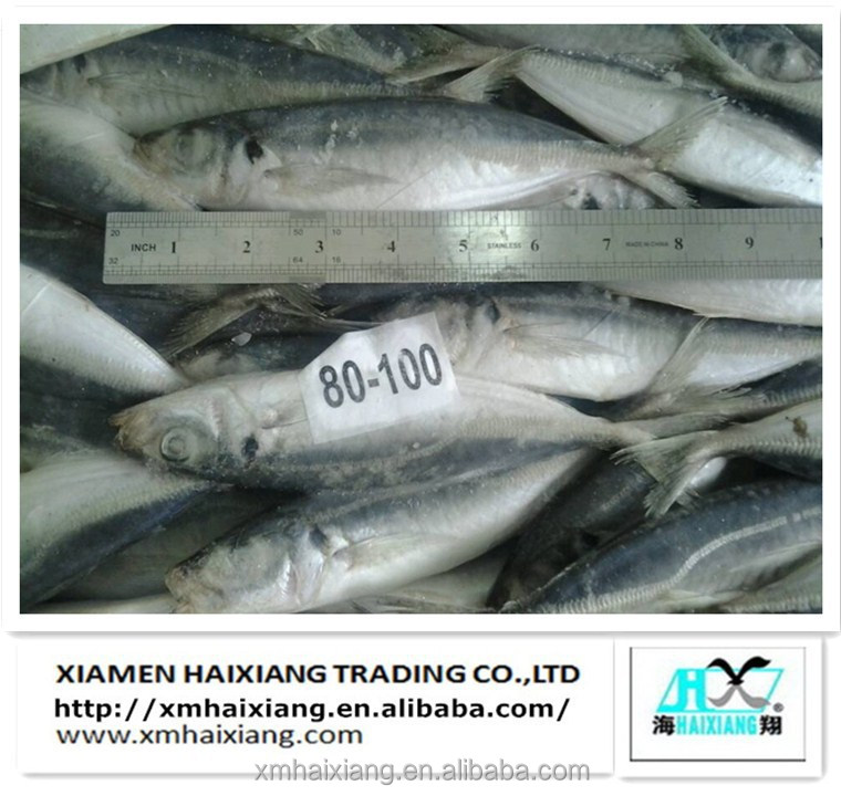 Frozen whole horse mackerel fish